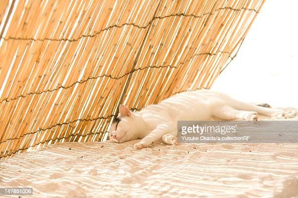Sleeping cat in the shade