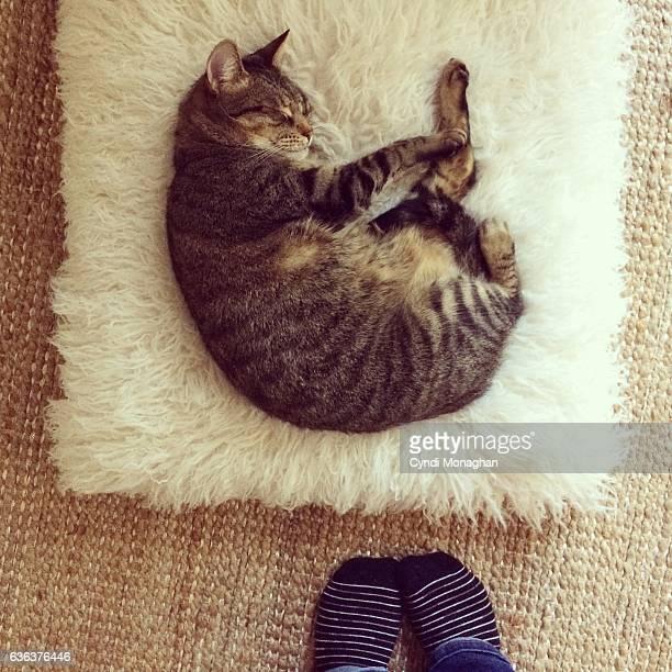 Sleeping Cat on Pouf