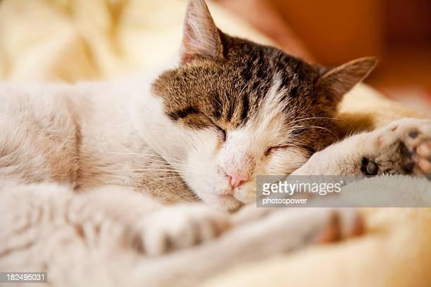 Chat à coucher