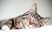 Portrait of tabby cat sleeping
