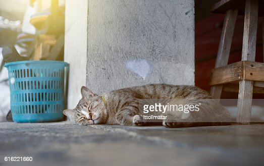 Sleeping cat : Stock Photo
