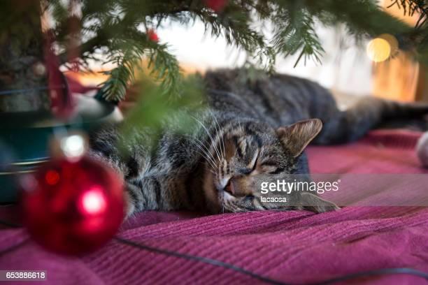 sleeping cat under a christmas tree