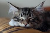 Sleeping Dartagnan