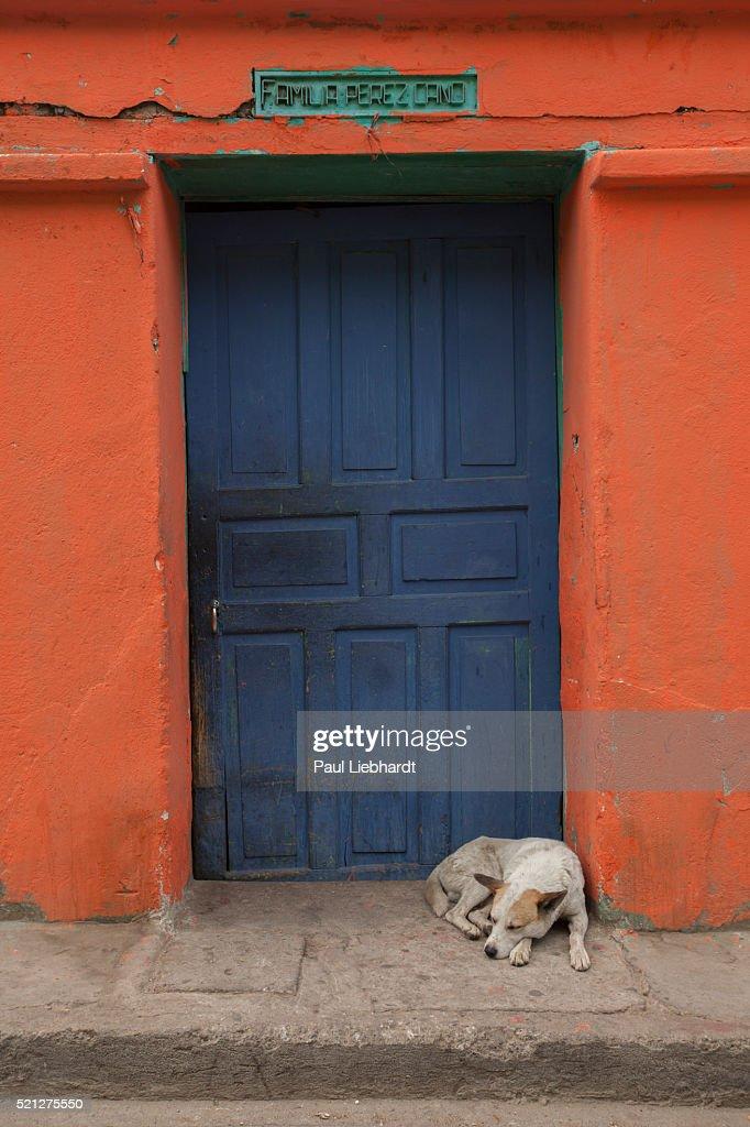 Sleeping Dog in Doorway