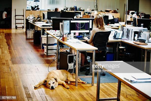 Sleeping dog lying underneath workstation