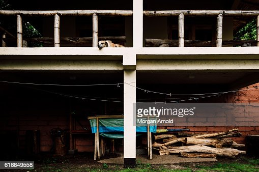 A sleeping dog on a balcony over a storage area : Stock Photo