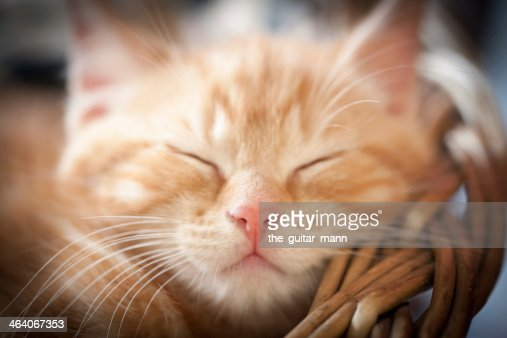 sleeping kitten : Stock Photo
