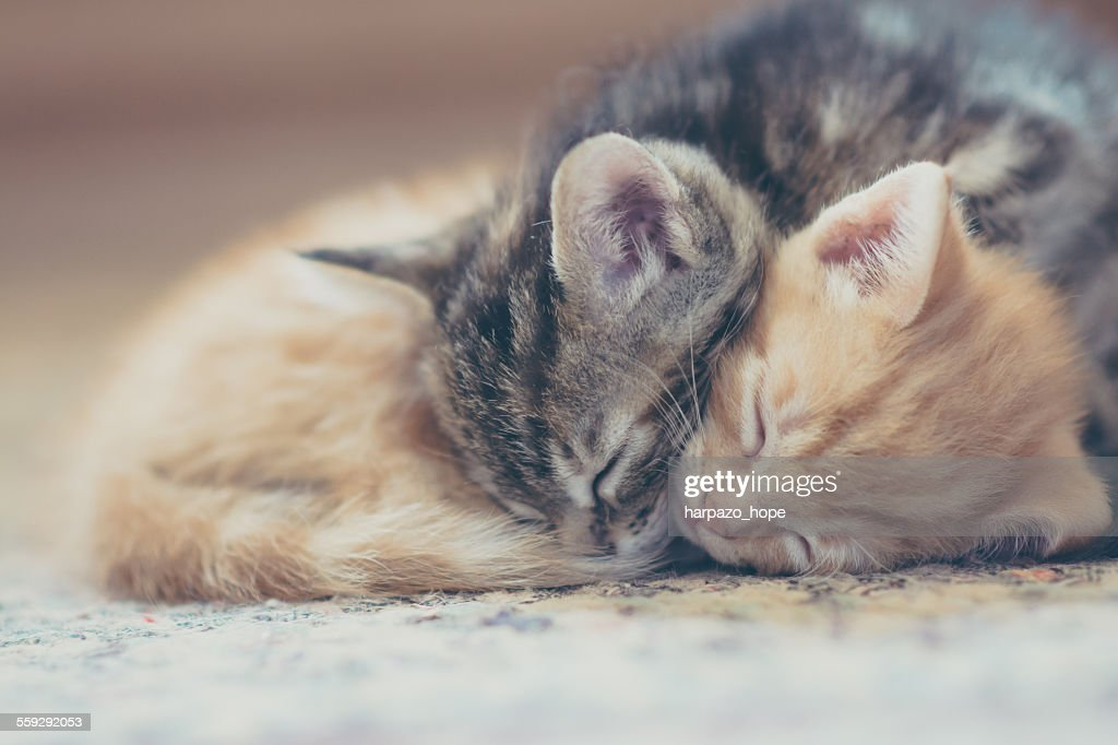 One kitten sleeps on top of the other with their heads side by side.