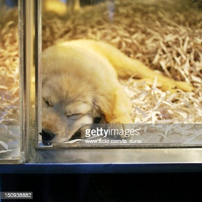 Sleeping puppy : Stock Photo