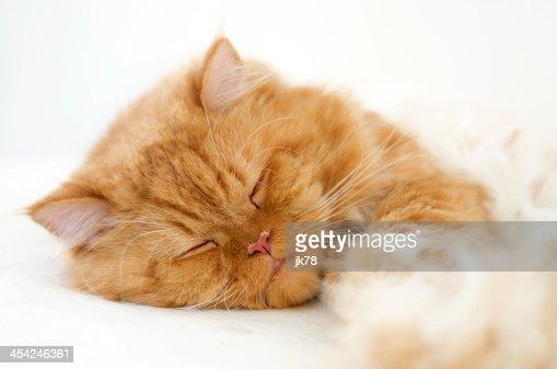 Sleepy cat : Stock Photo