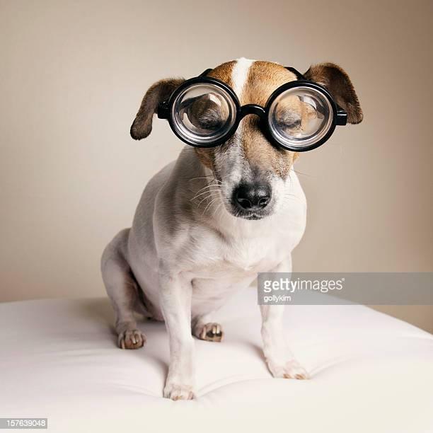 Sleepy dog with Geek Glasses