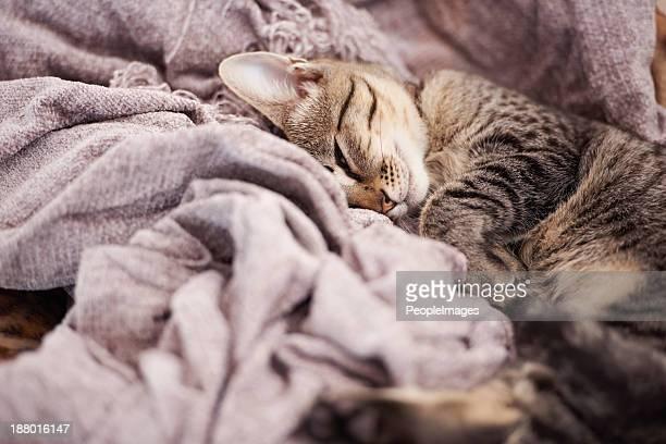 Sleepy temps