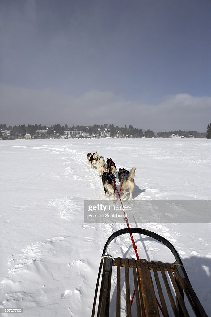 Sleighdogs : Stock Photo