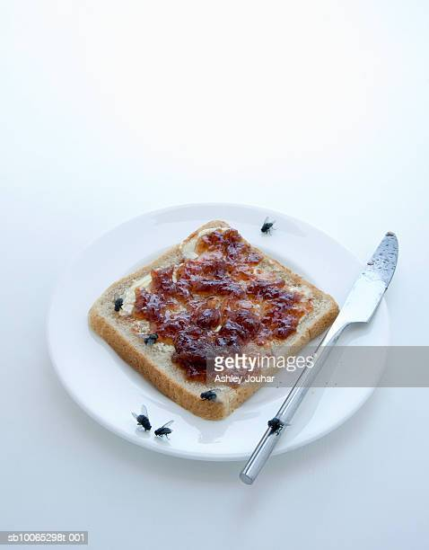 Slice of bread and jam on plate covered in houseflies