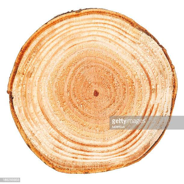 Slice through a tree showing tree rings