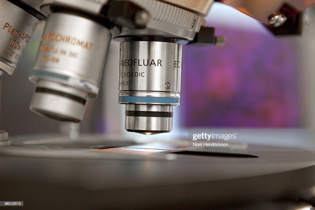 slide under high-powered microscope : Stock Photo