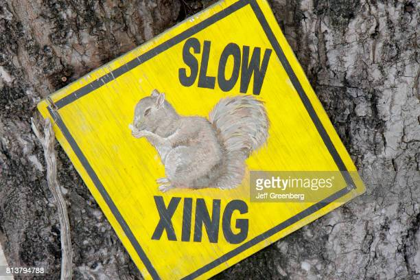 A slow squirrel crossing sign in Key Largo