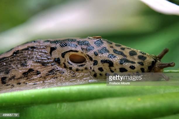 Slug Breathing Hole