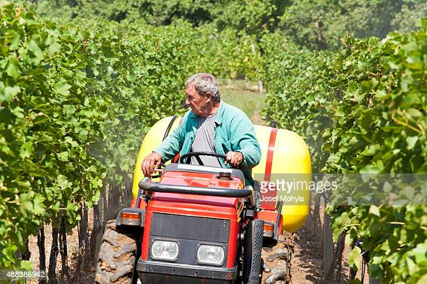 Small agriculture machinery sprayer in action in vineyard