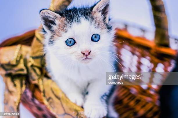 Small and cute cat in basket