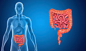 The human gastrointestinal tract (GI tract) is an organ system responsible for consuming and digesting foodstuffs, absorbing nutrients, and expelling waste.