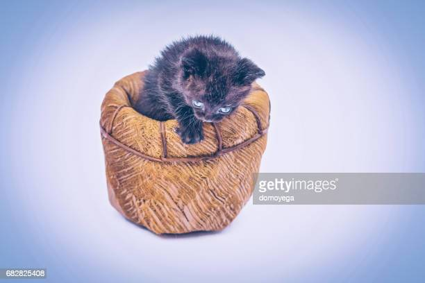 Small and soft kitty sitting in a basket