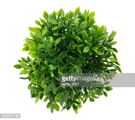 Small artificial tree in a pot : Stock Photo