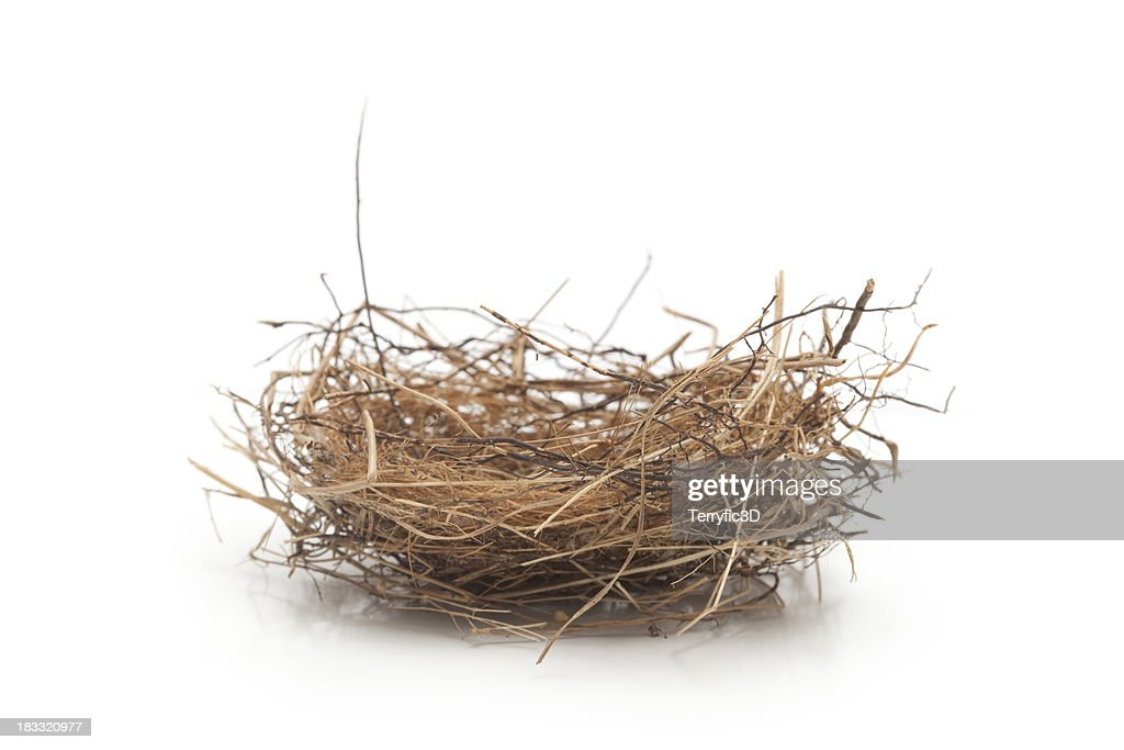 Small Bird Nest