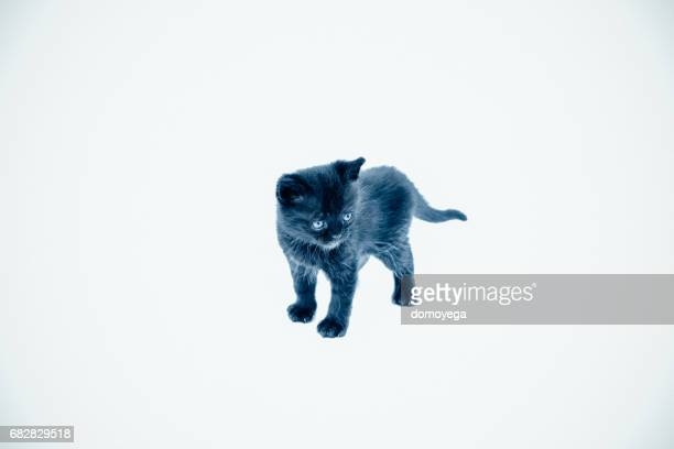 Small black cat isolated on a white background