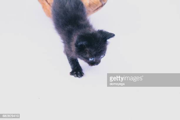 Small black kitten coming out from basket