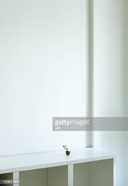A small bonsai on the shelf