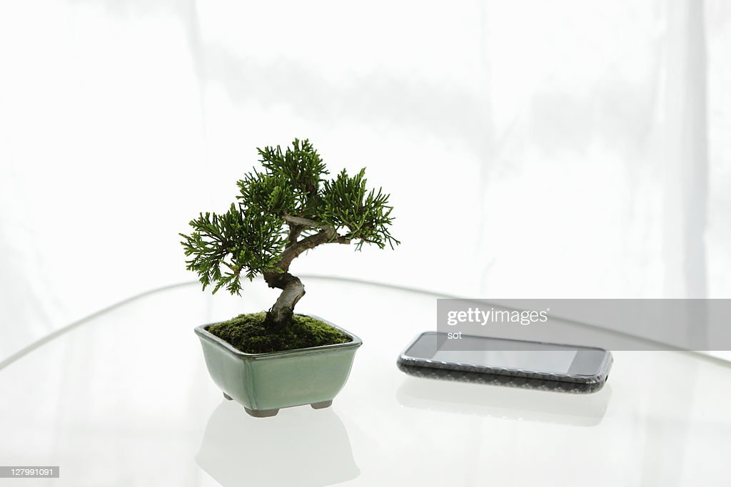 A small bonsai with PDA on the table : Stock Photo