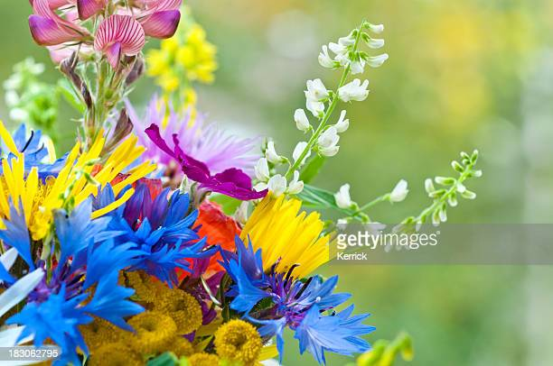 small bouquet of wild flowers