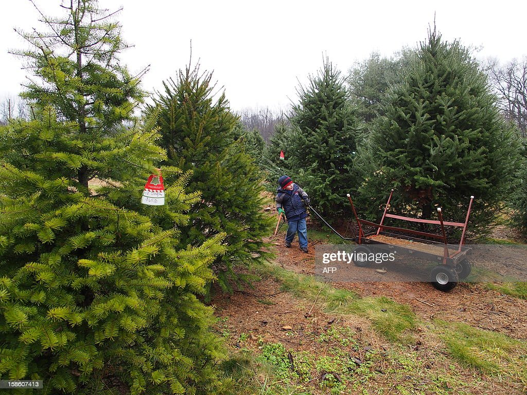 A small boy carries a saw and pulls a cart as his family selects its Christmas tree at Ridgefield Farm in Harper's Ferry, West Virginia, December 9, 2012. Tree growers report growing demand among consumers for smaller and more natural looking trees. AFP PHOTO / Robert MacPherson