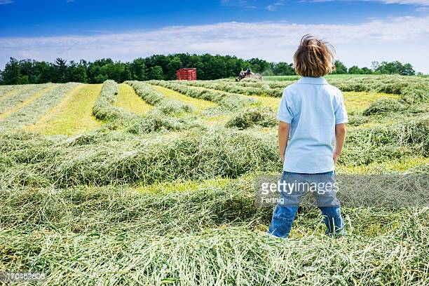 Small boy looking out on a hay field