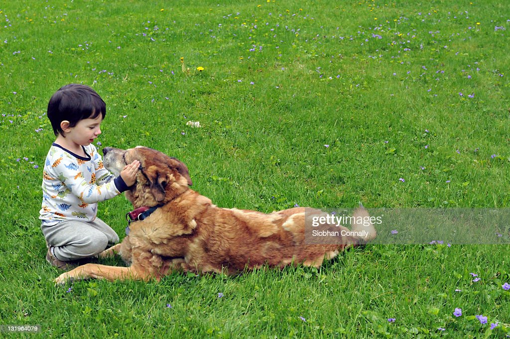 Small boy playing with his dog : Stock Photo