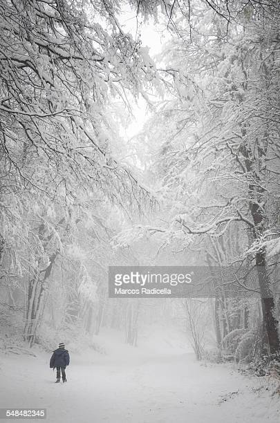 Small boy walking in snow forest