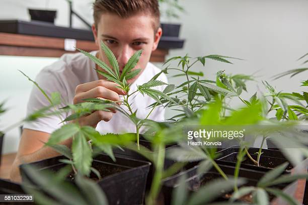 Small business marijuana dispensary in Oregon.