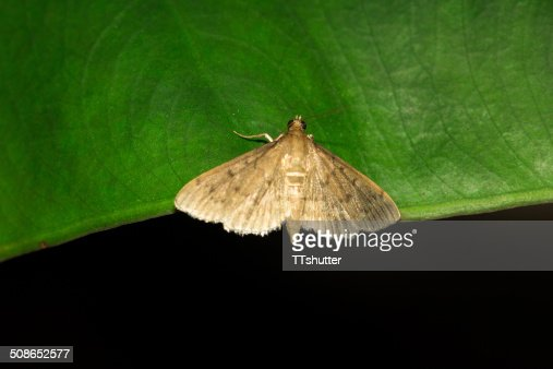 Small butterfly. : Stock Photo
