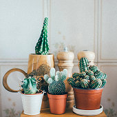 Small Cactus Plants in a Pot on wooden table