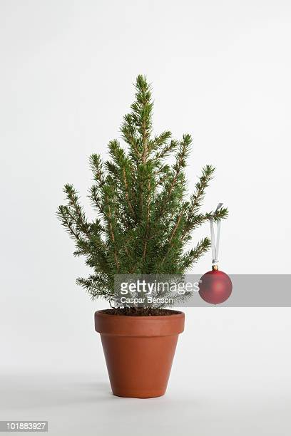 A small Christmas tree decorated with one bauble