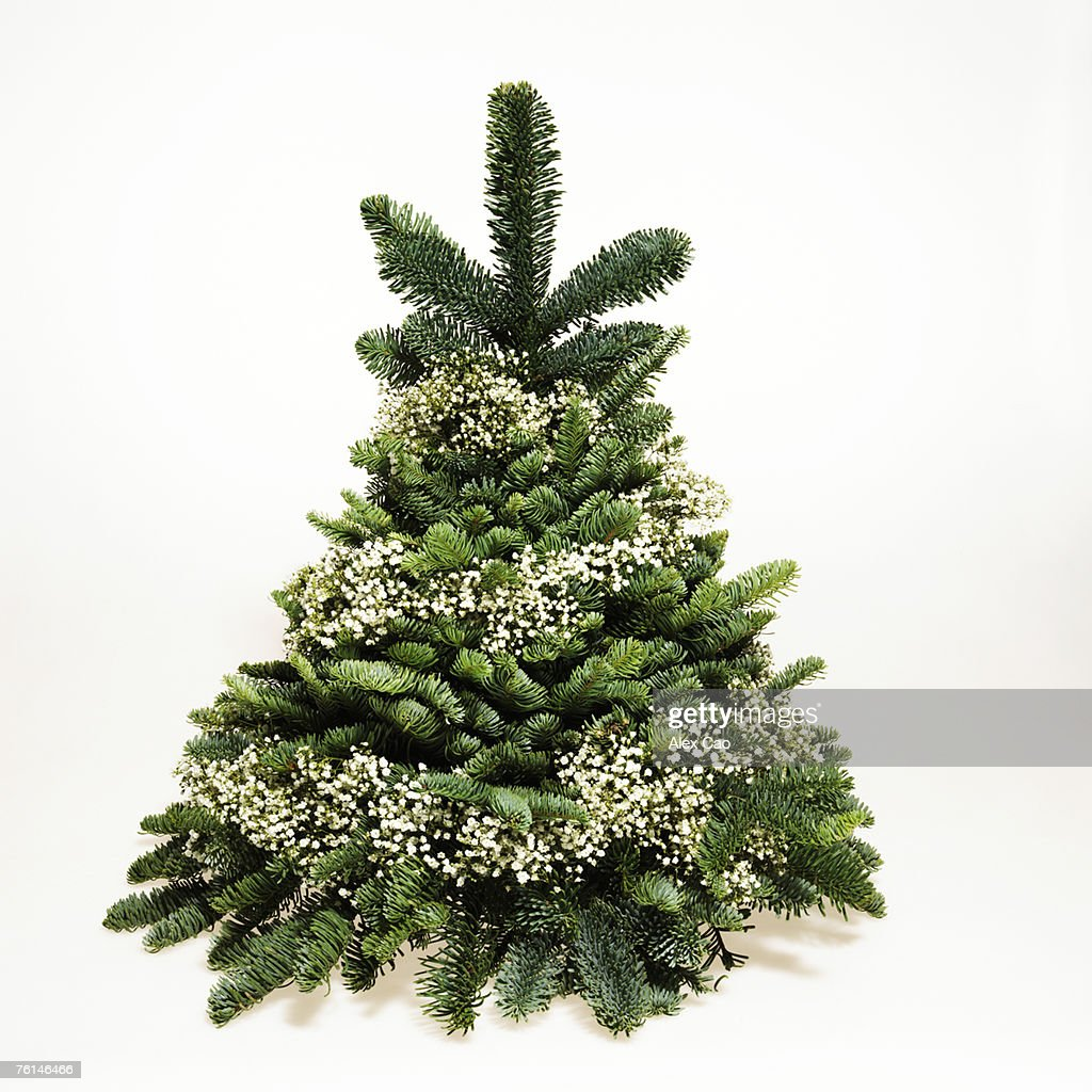 small christmas tree wrapped in babys breath stock photo - Small Black Christmas Tree