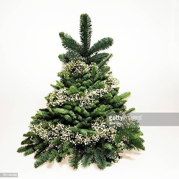 Small Christmas tree wrapped in baby's breath