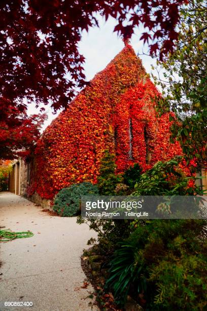Small church with orange and red leaves, Mount Macedon, Victoria, Australia