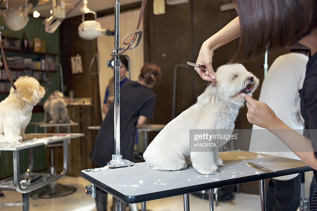 A small dog being groomed in a shop in Tokyo.