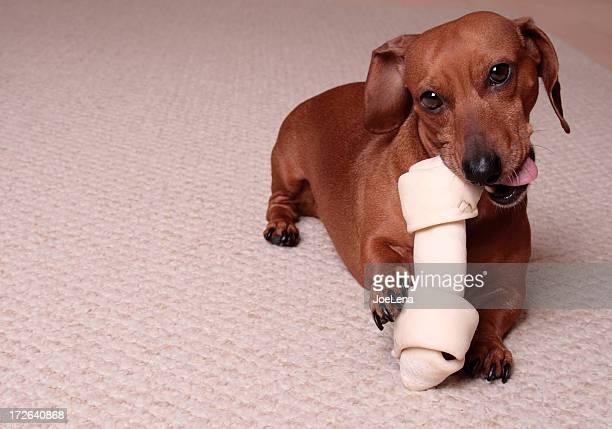Pequeno Cachorro, osso grande