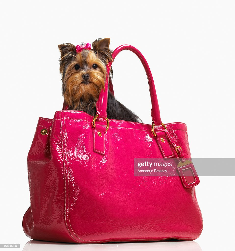 Small Dog in Pink Purse : Stock Photo