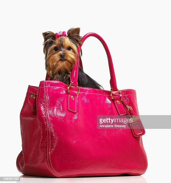 Small Dog in Pink Purse