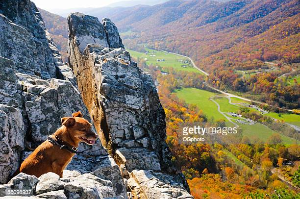 Small dog overlooking an autumn view.