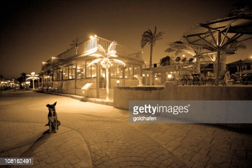 Small Dog Sitting on Egyptian Street at Night : Stock Photo